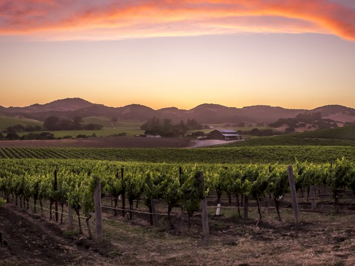Sonoma County & the Napa – Valleys of Plenty