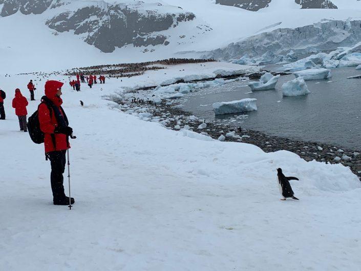 Suzy's Exploration of a Frozen Frontier