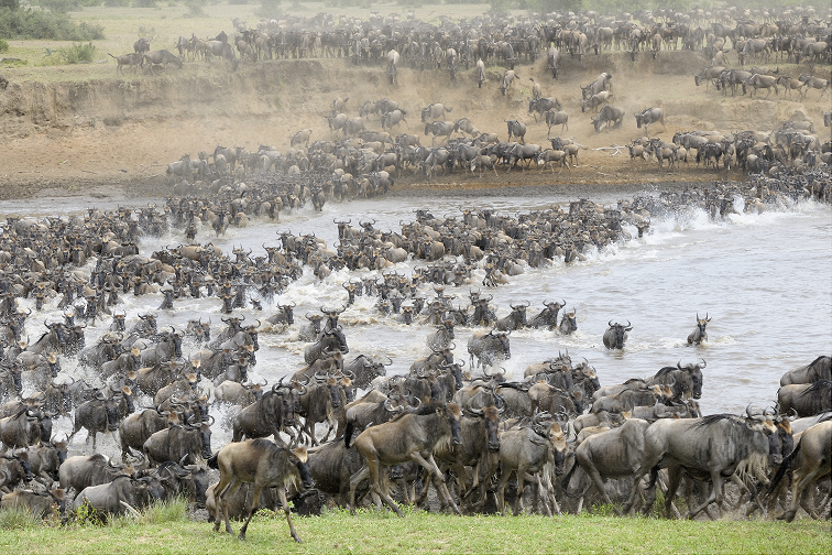 In the Footsteps of the Great Migration